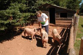 PEI Farm Experiences